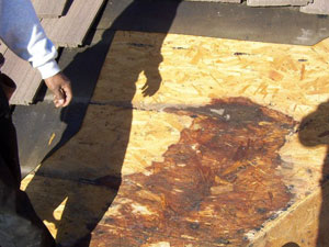 Dry Rot Damage Repair