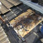 Dry Rot Repair sm2