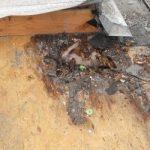 roof damage, roof water damage, roof dry rot, roof leak, rook water damage repair